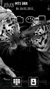 Grey tigers